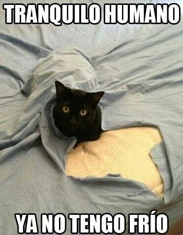 Ya No Tengo Frio Gatitos Divertidos Memes De Gatos Divertidos Humor Divertido Sobre Animales