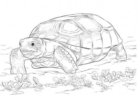 schildkroten ausmalbilder schildkröte ausmalen