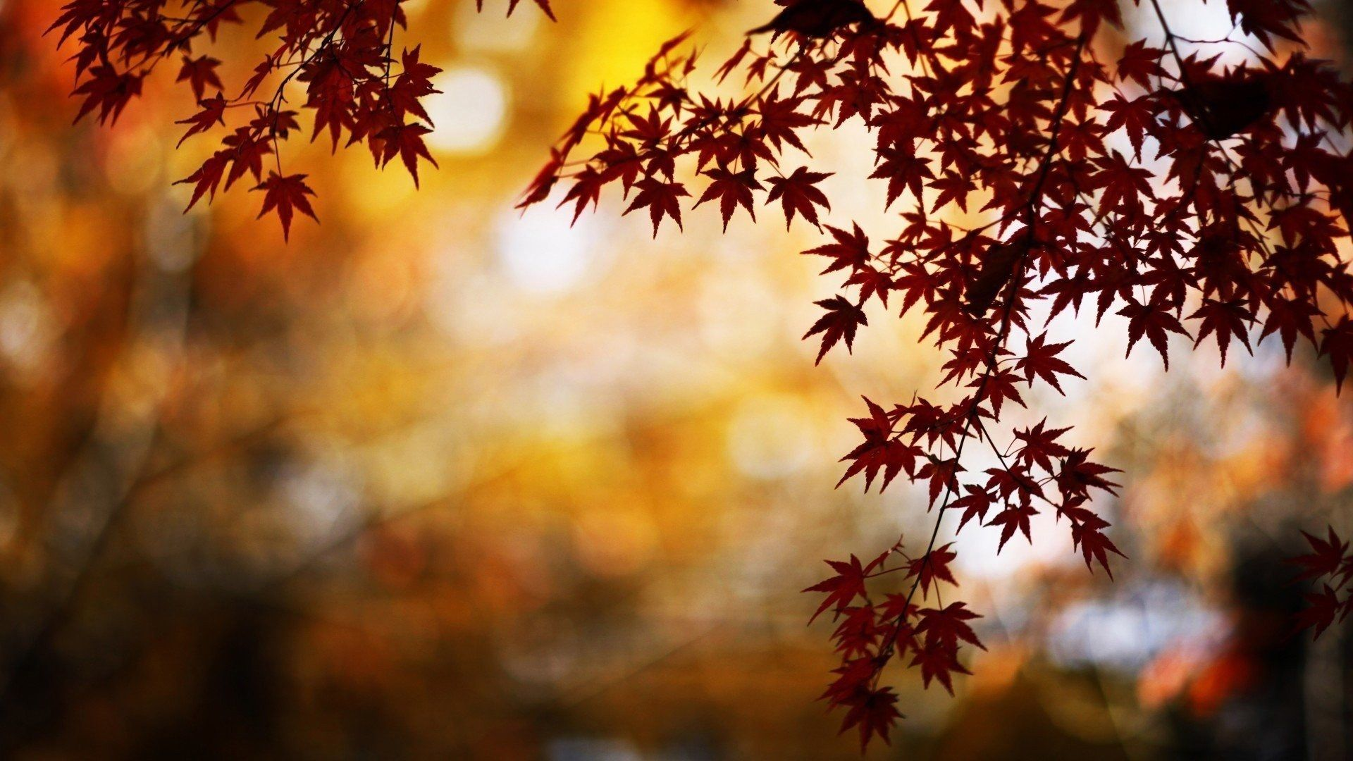 1920x1080 Nature Wallpaper For Desktop Background Autumn Leaves Wallpaper Bokeh Wallpaper Fall Wallpaper