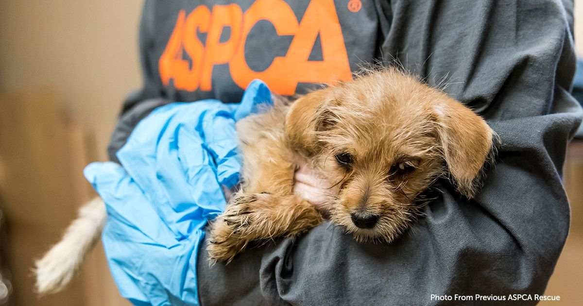 The Aspca Assists In Rescuing Animals Displaced By California Mudslides Animals Aspca Animal Rescue