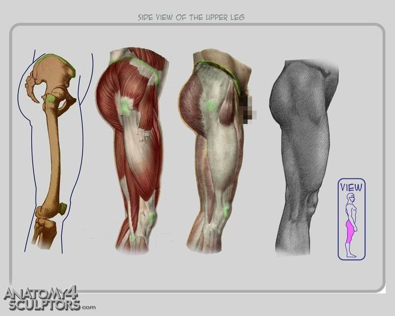 Pin de James Moore en Anatomy | Pinterest | Anatomía, Anatomia ...