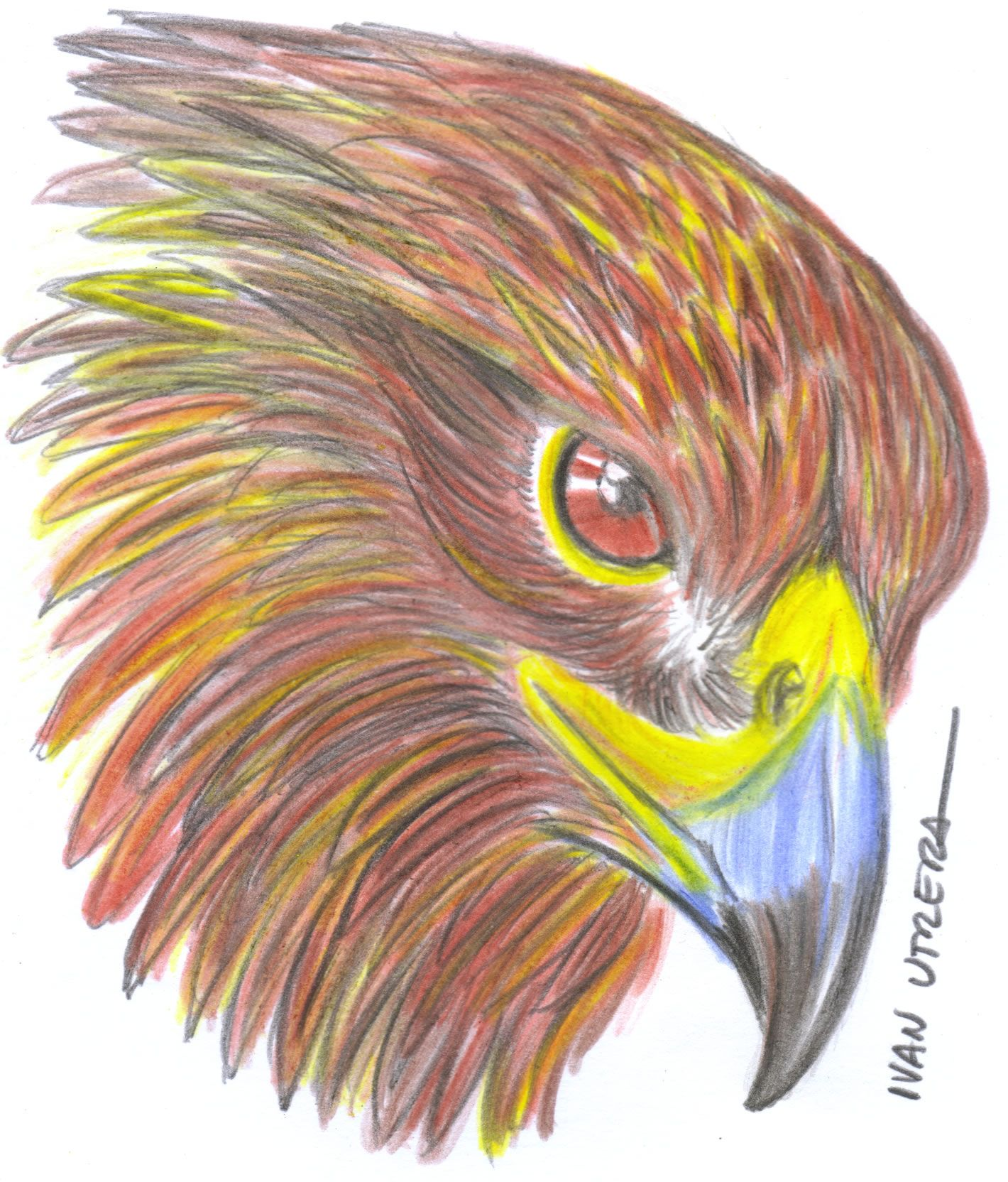 Dibujo De Aguila En Lapices De Colores Lapices De Color Drawings
