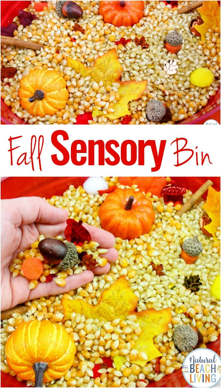 Fall Sensory Bin for Toddlers and Preschoolers #fallseason