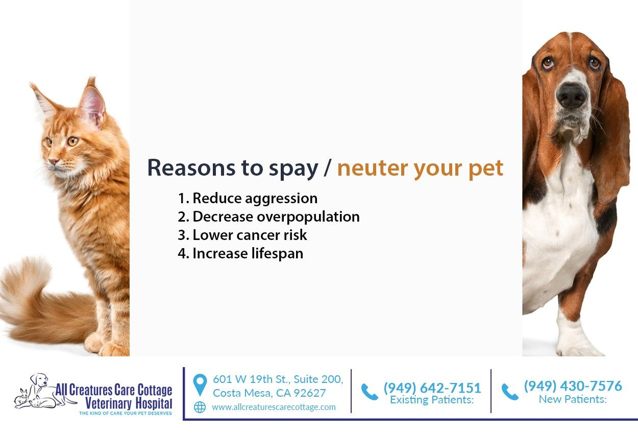 It S Important To Spay And Neuter Your Pet At A Quality Vet Clinic To Ensure They Receive The Best Care Possible Call Us At 949 430 7576 To Learn With Images Vet Clinics