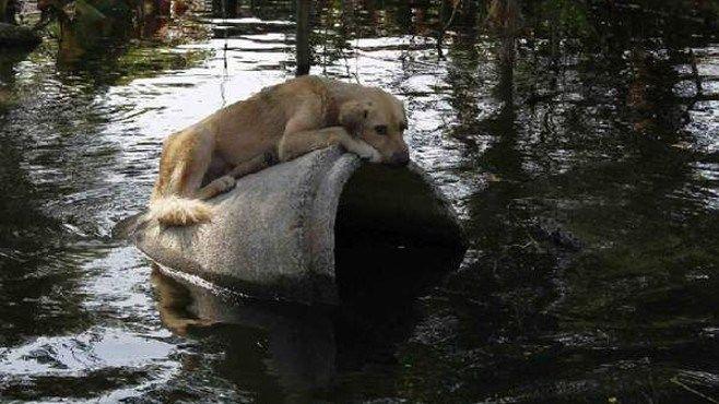 La identificación de las mascotas. AQUI: http://www.ronniearias.com/columnistas/miguel-longo/la-identificacion-de-las-mascotas_26335.html