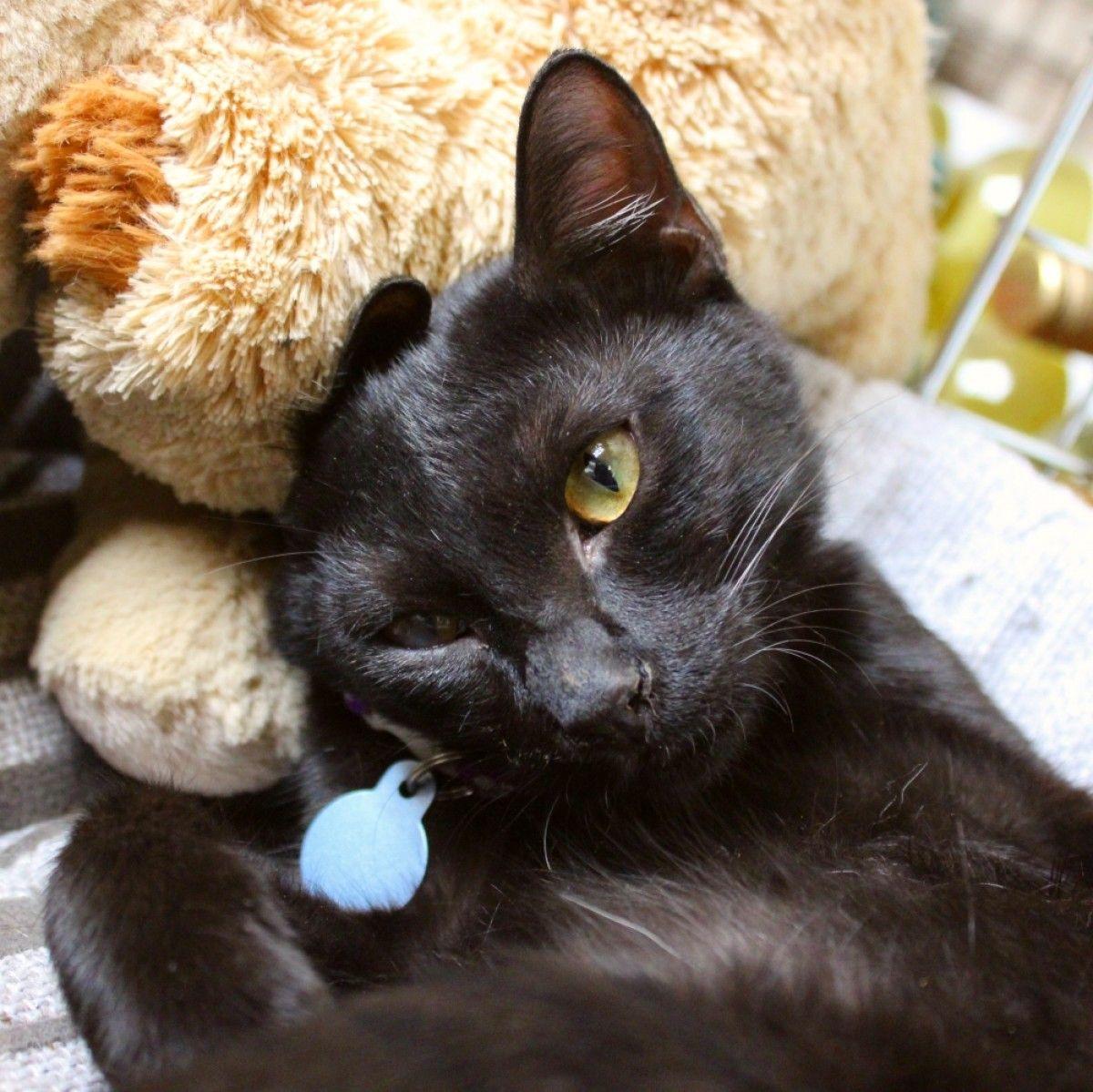 Black Lady For Adoption Cats Dubai Adopt My Pets Cat Adoption Pets Pets Cats
