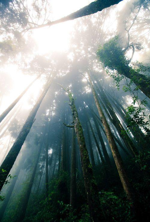 sunlight + trees