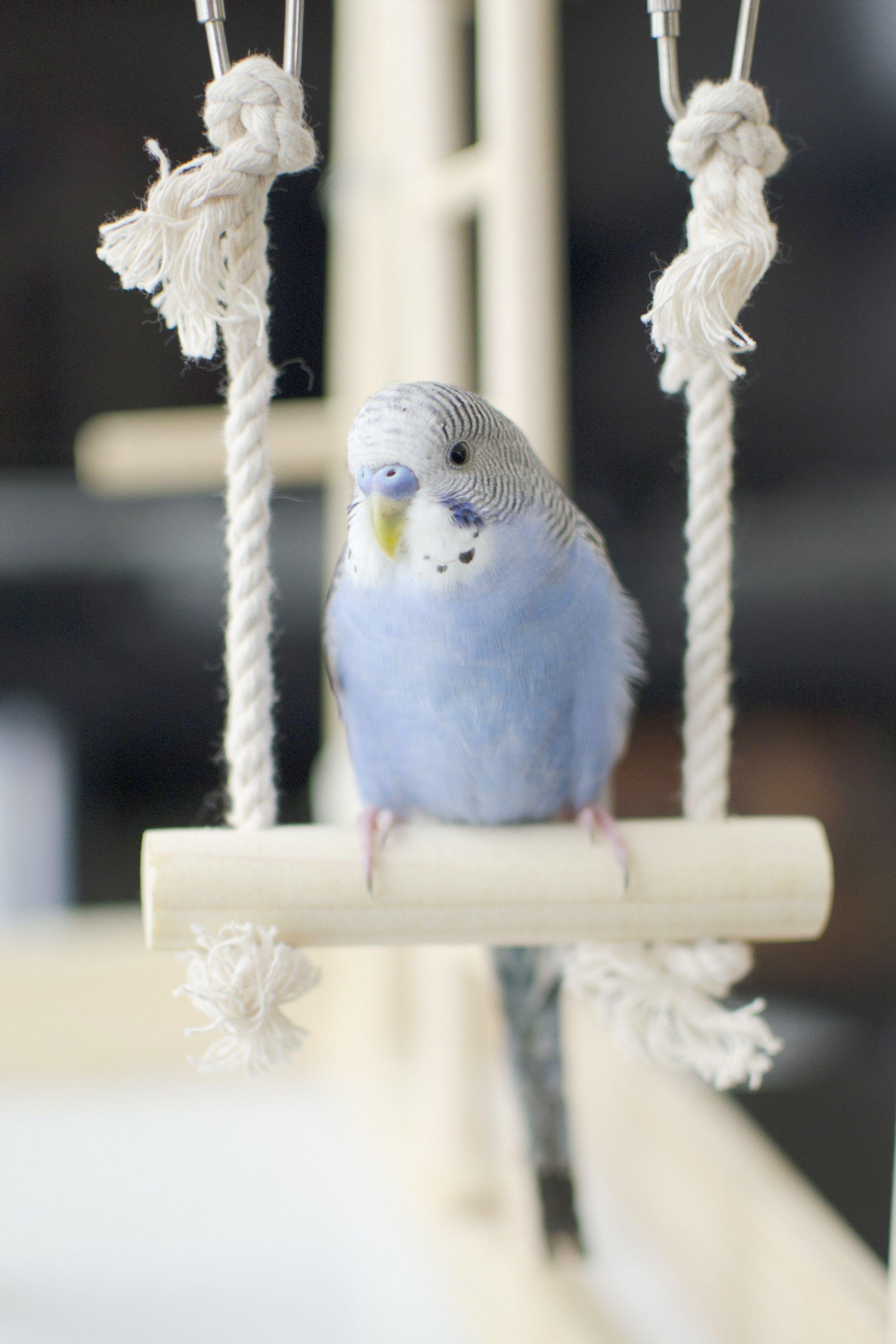 Fantastic > Parakeet Mating Call Sound