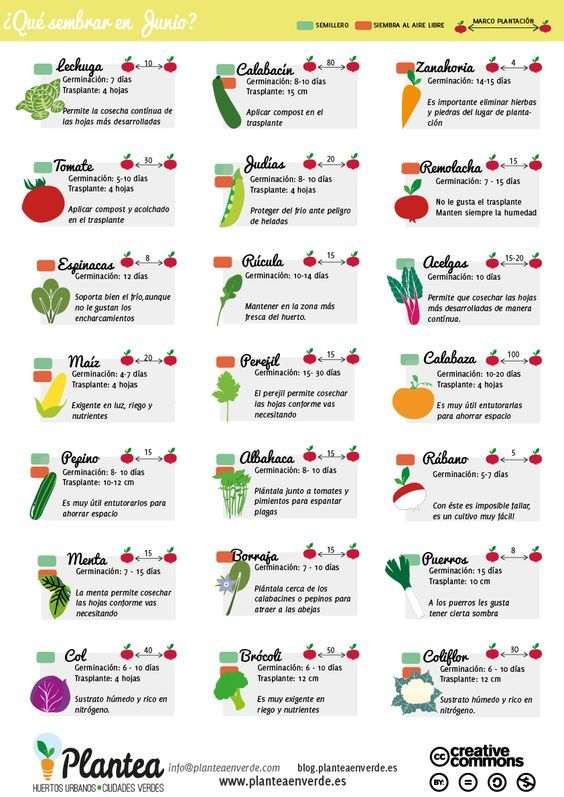 Paginas con infografia para siembra aol image search for Paginas de jardineria