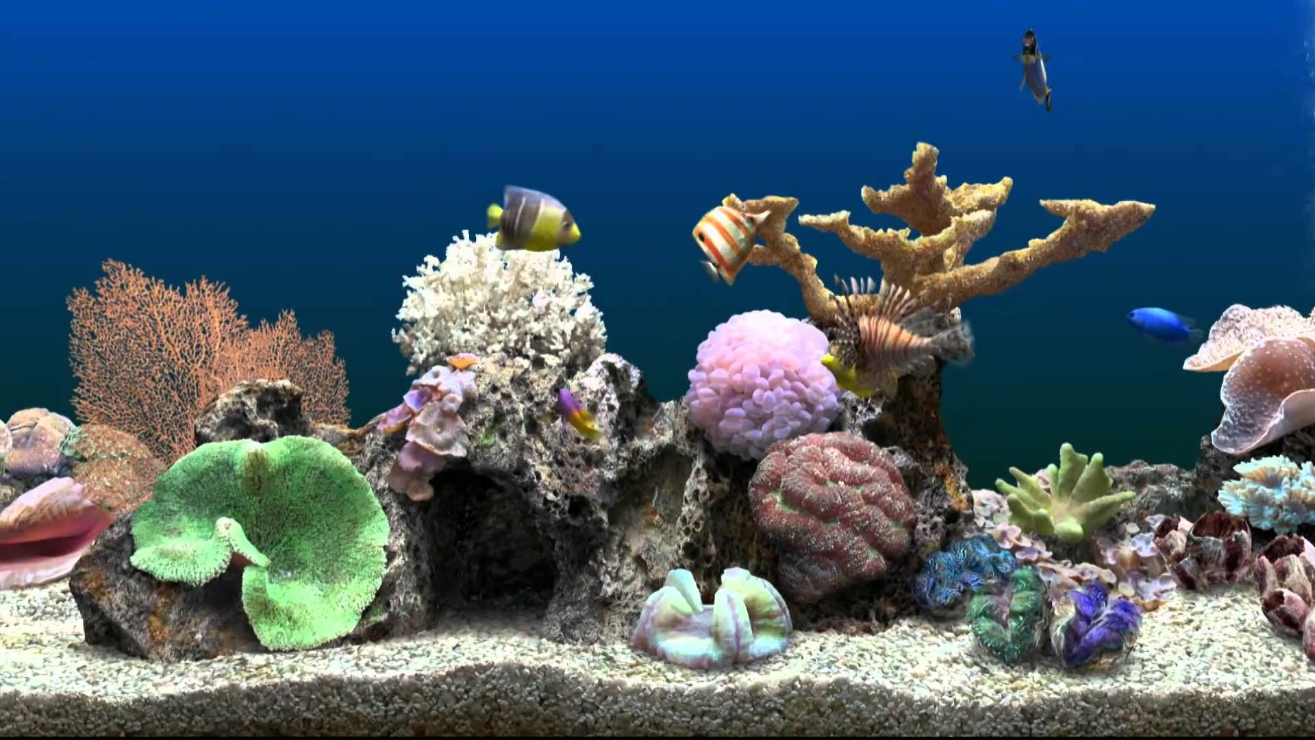 Kick back and relax while watching this peaceful salt water virtual