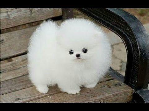 El Perro Mas Lindo Perros Y Cachorros Lindos Perros De Peluche Mascotas Bonitas