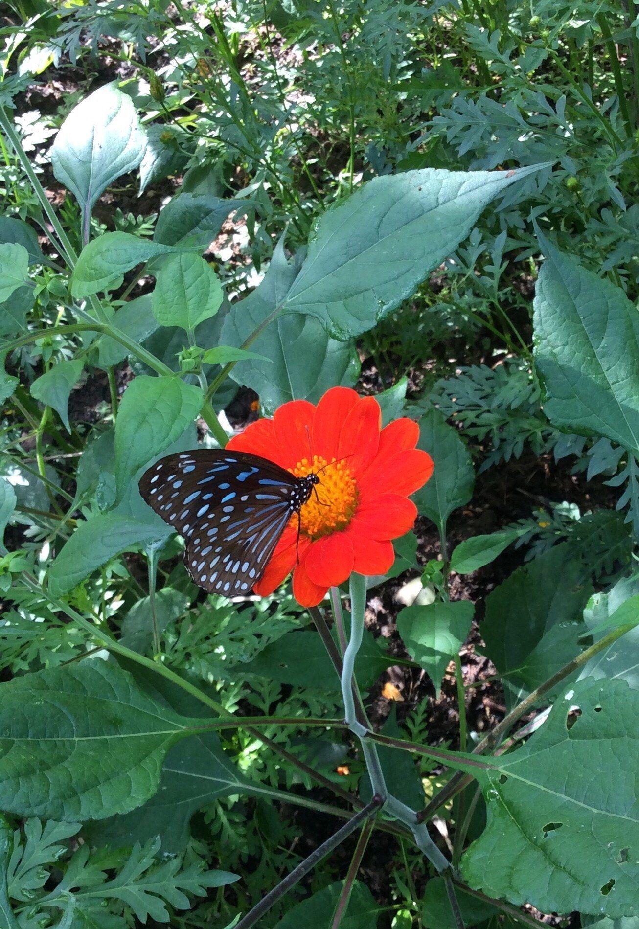 Kep Butterfly Farm, Kep Veja 151 avaliações, dicas e 83