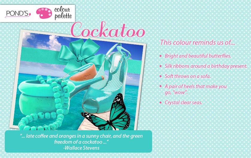 #Cockatoo #Colour