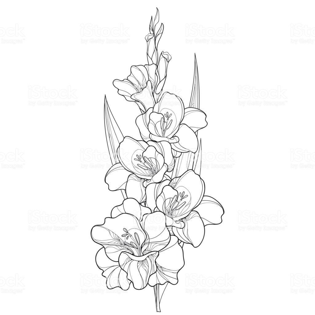 Gladiolus Drawing Gladiolus Flower Tattoos Larkspur Tattoo Gladiolus Tattoo