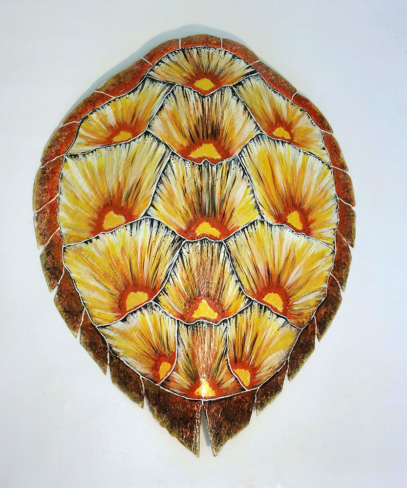 Loggerhead Sea Turtle Shell