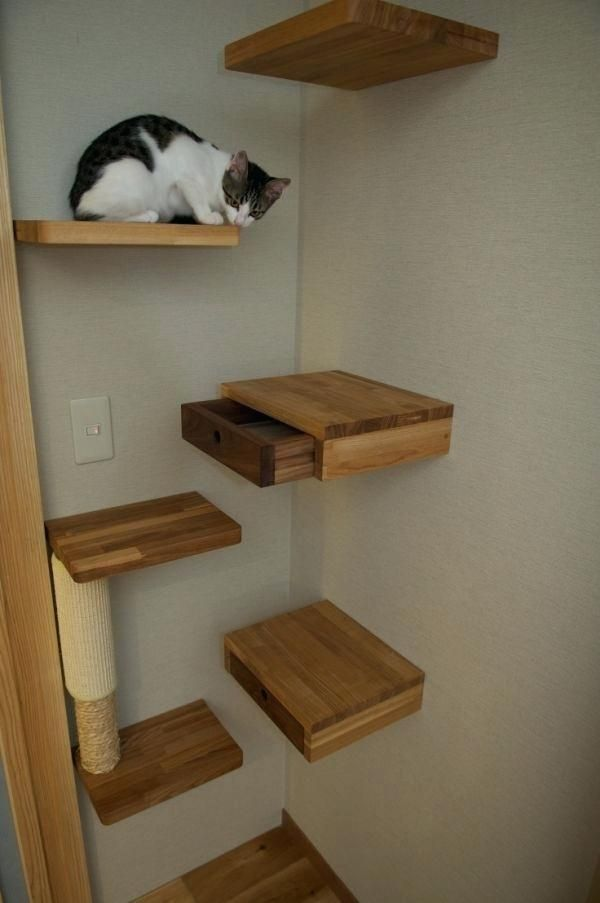 Cat Wall Shelves Diy Cats Love To Climb On Shelves And Furniture
