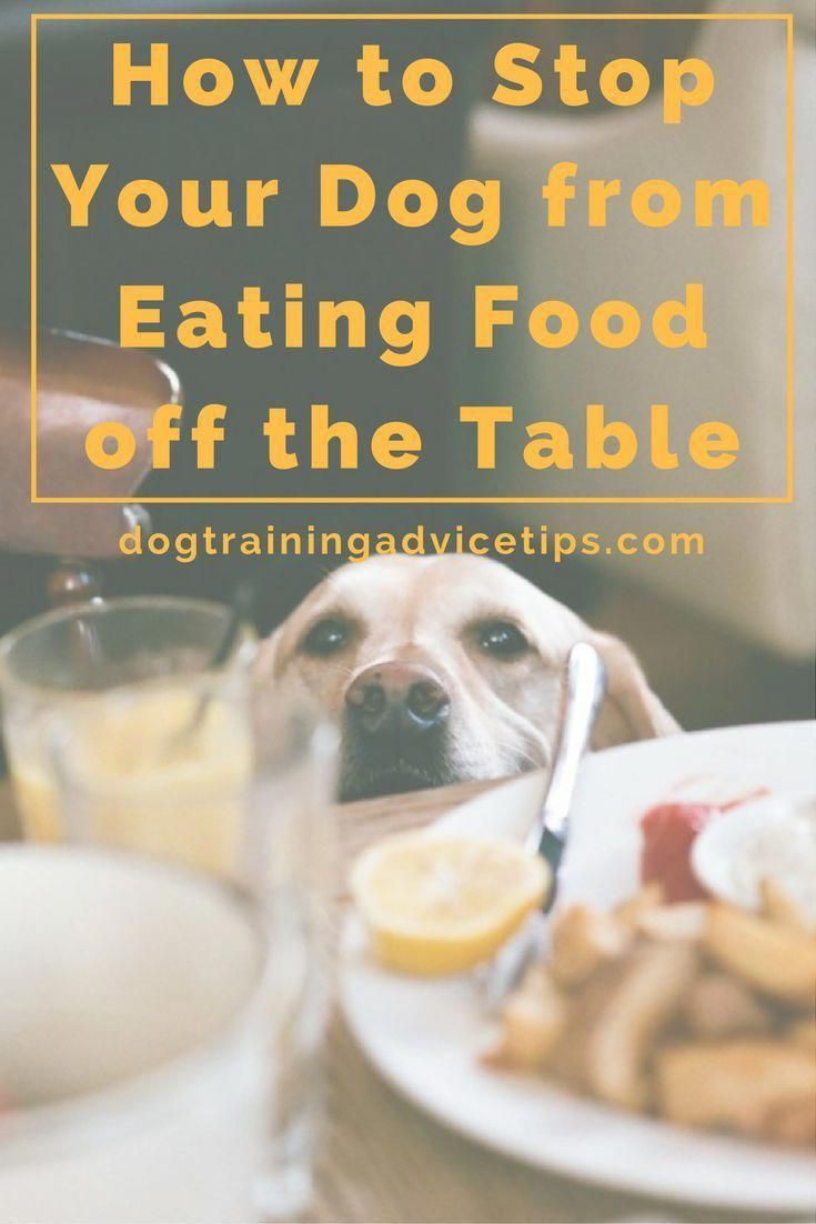 How To Stop Your Dog From Eating Food Off The Table