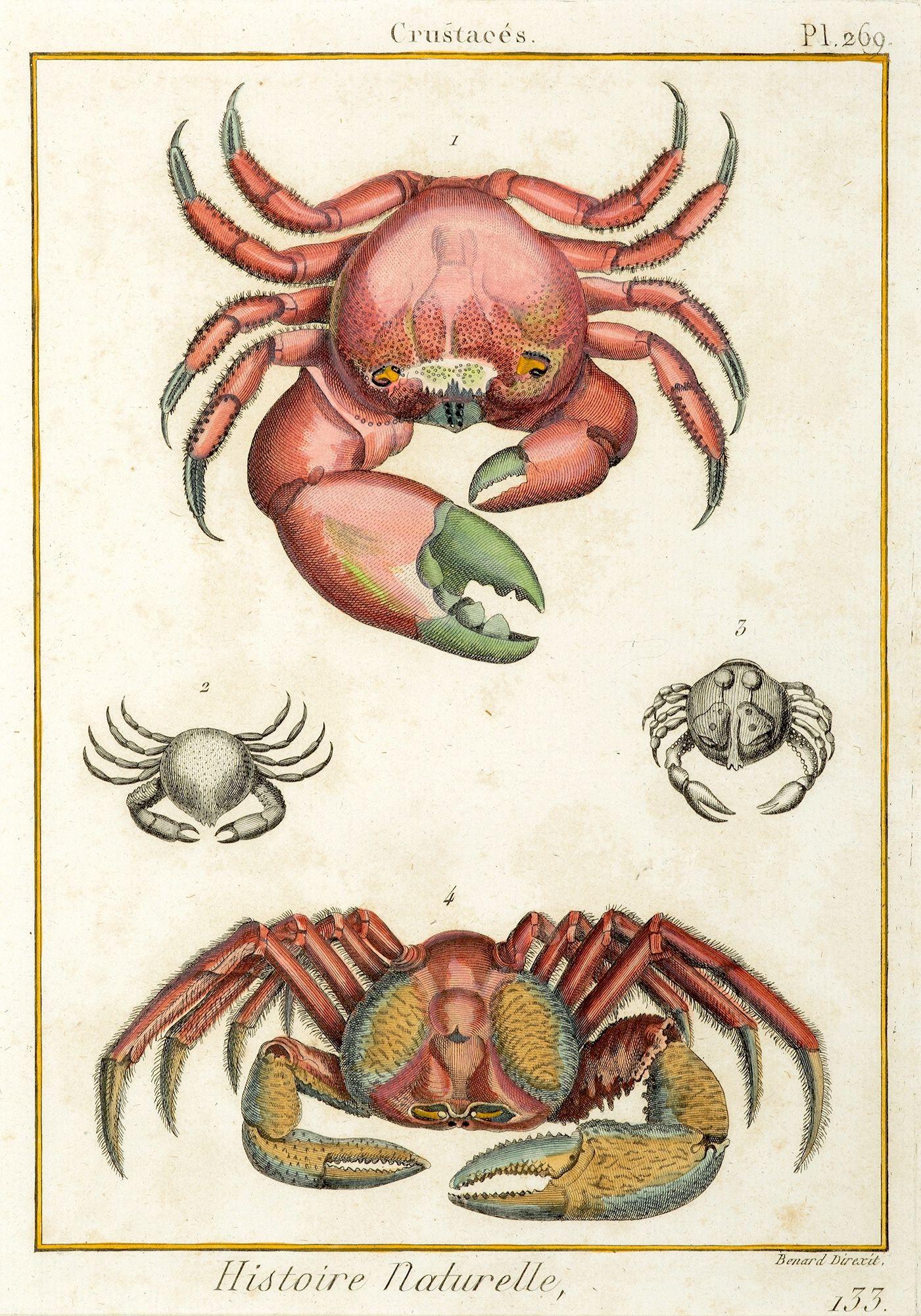 Title: Crustaces [Crab] Artist: Jacques Eustache de Seve (1742 ...
