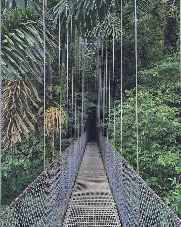 Step off the beaten path  into the jungle! Arenalhellip