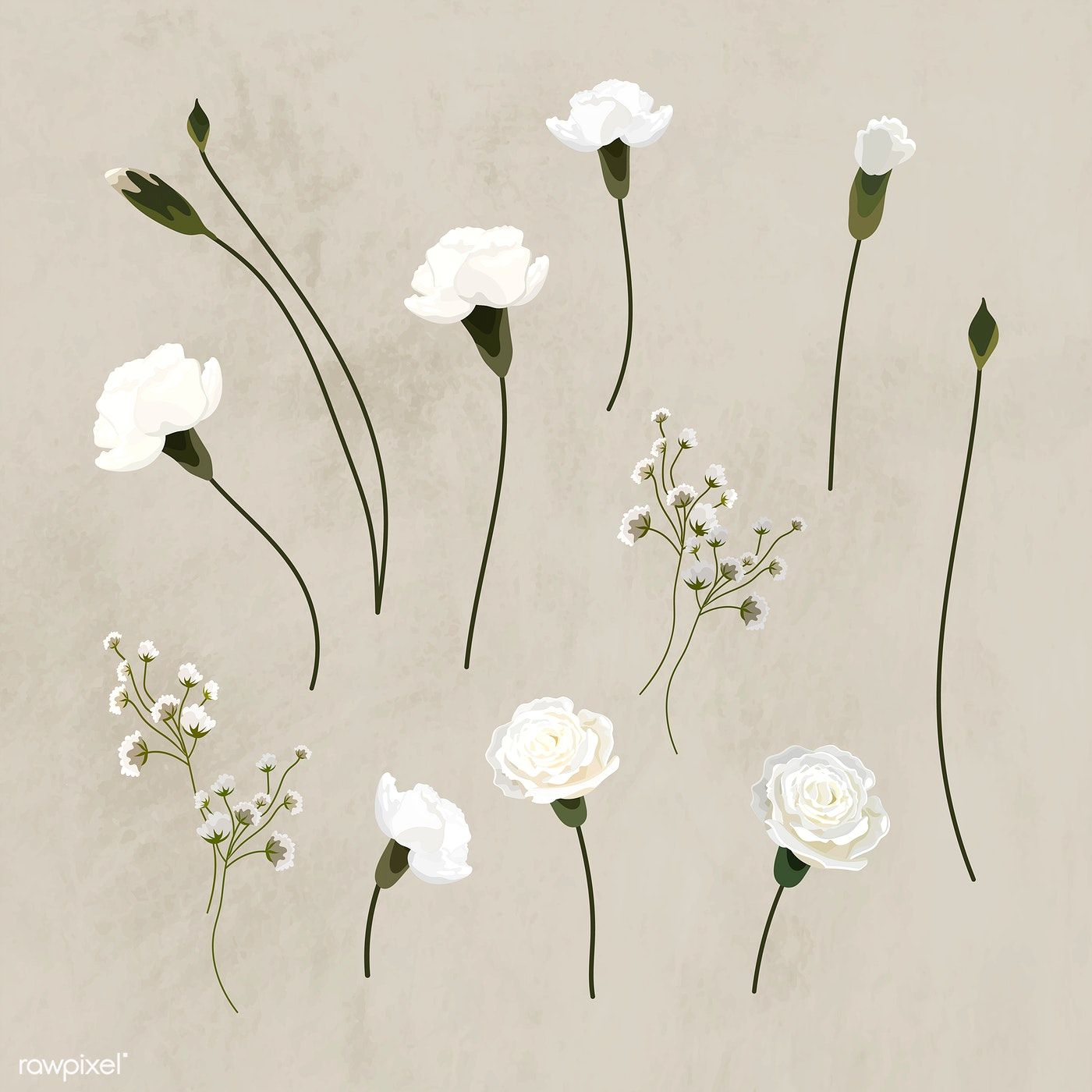 Blooming White Carnation Design Element Collection Vector Free