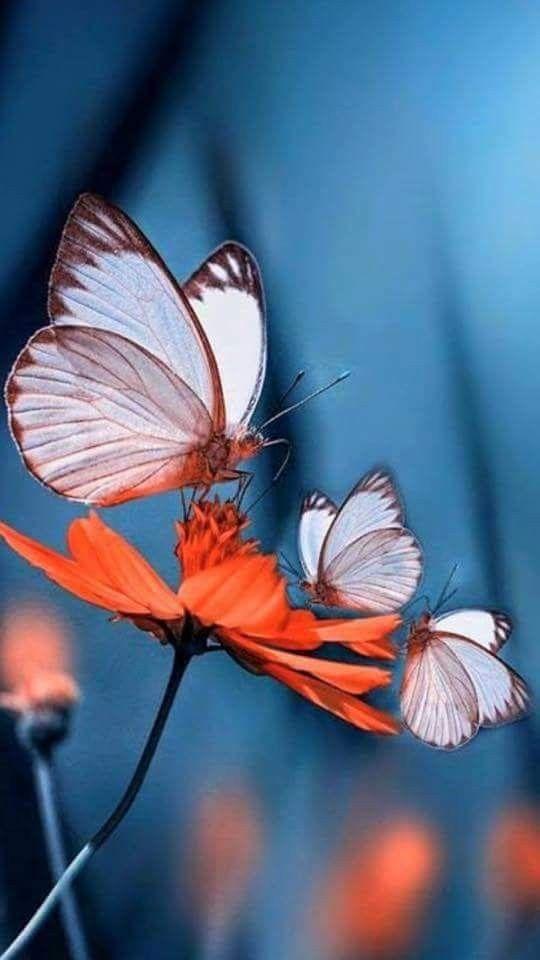Las 20 Fotografias De Flores Mas Hermosas E Impactantes Del Mundo