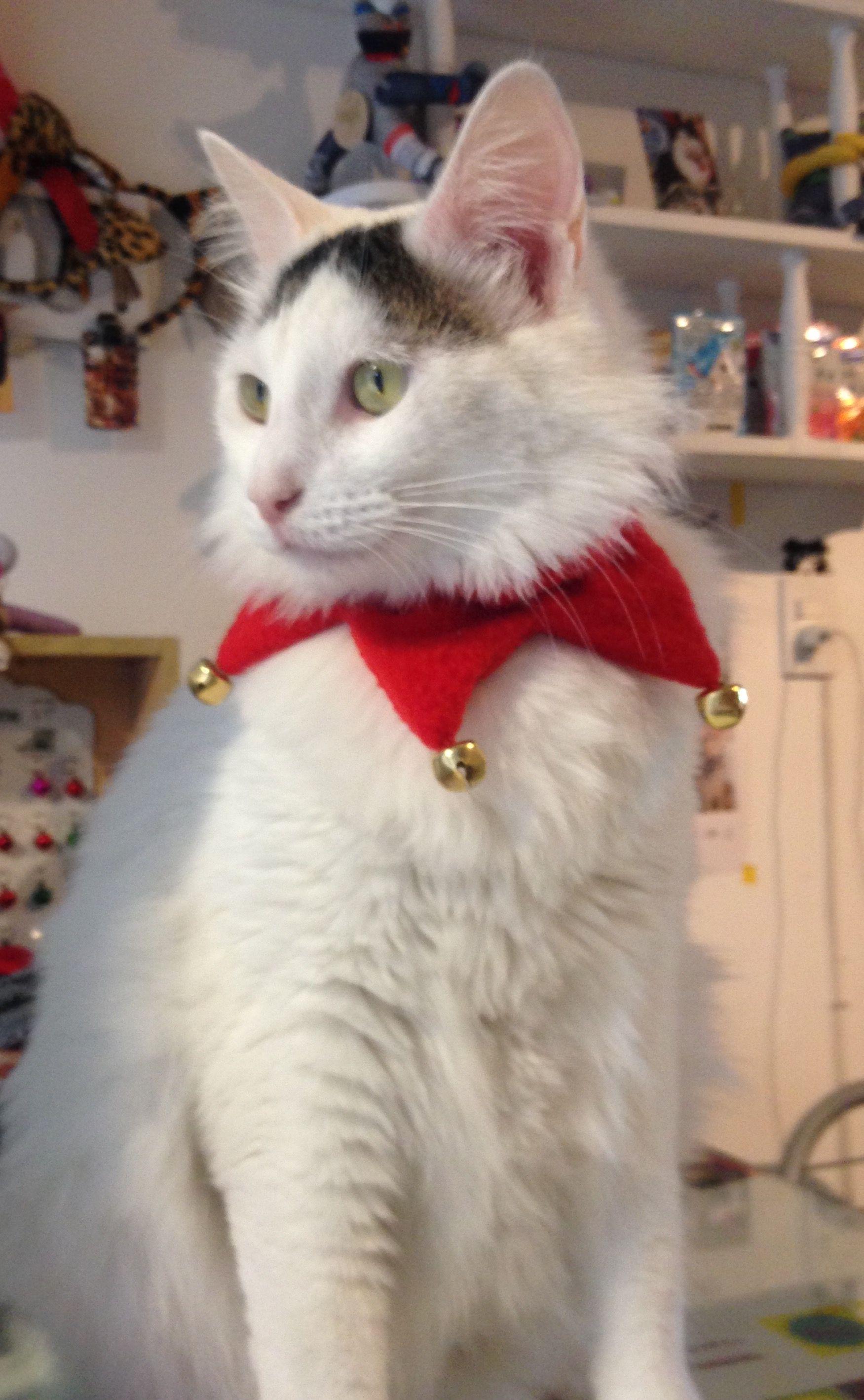 Collar arlequin navidad gato y perro peque o tallas s