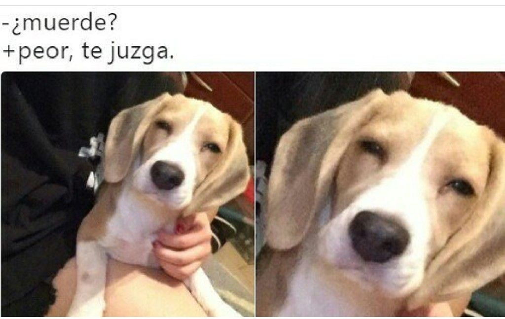 Muerde No Peor Te Juzga Memes Divertidos Memes Memes Comicos