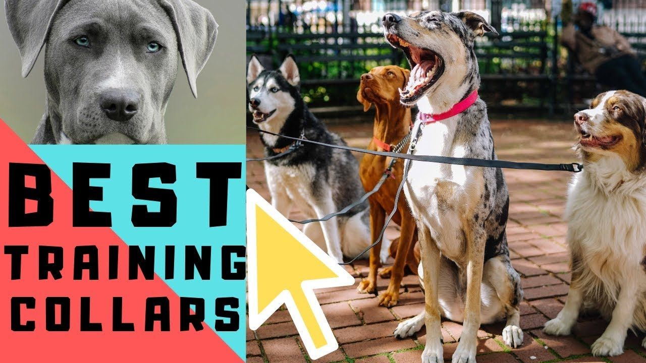 Best 5 Dog Trainer Collars Review 2019 Training Collar Best
