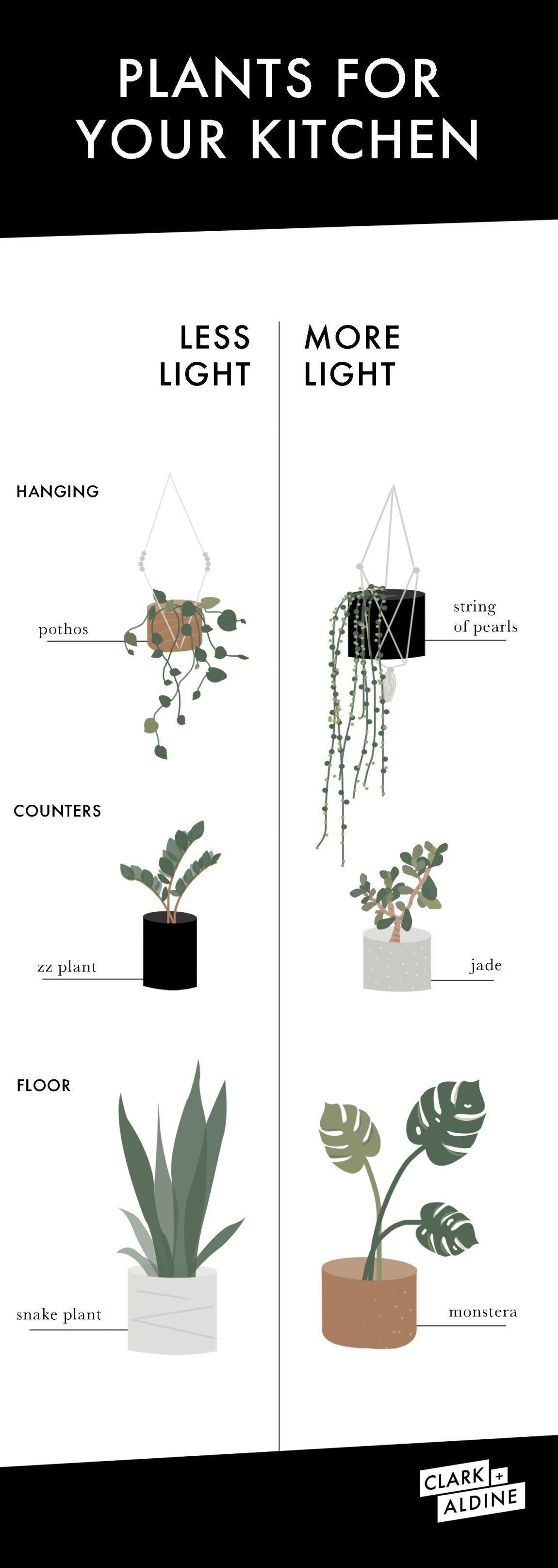 KITCHEN PLANTS EVEN YOU WON'T KILL - CLARK + ALDINE