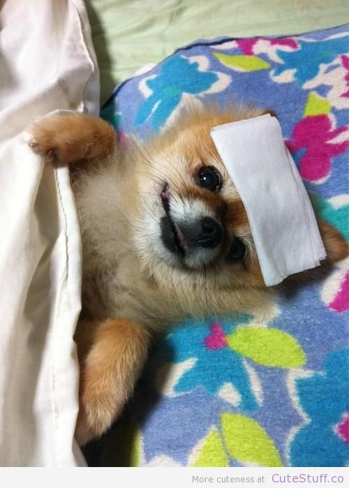 What Can Make A Dog Sick