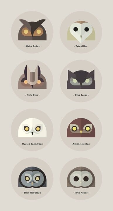 Owl types with latin names