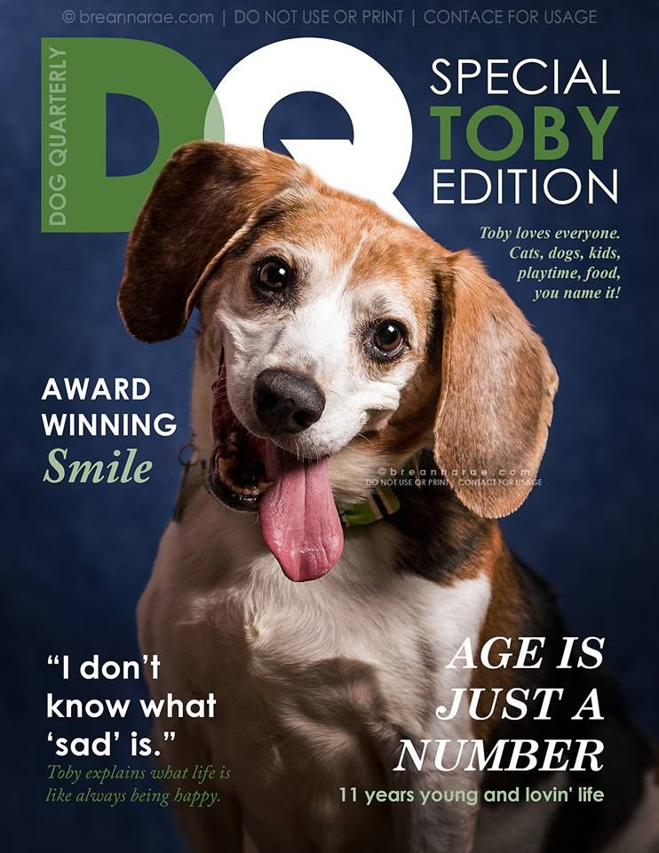 We Love This Fun Magazine Cover Promo For An Adoptable Pet By Hearts Speak Artist Member Breanna Rae Photography Animal Magazines Pet Magazine Dog Magazine