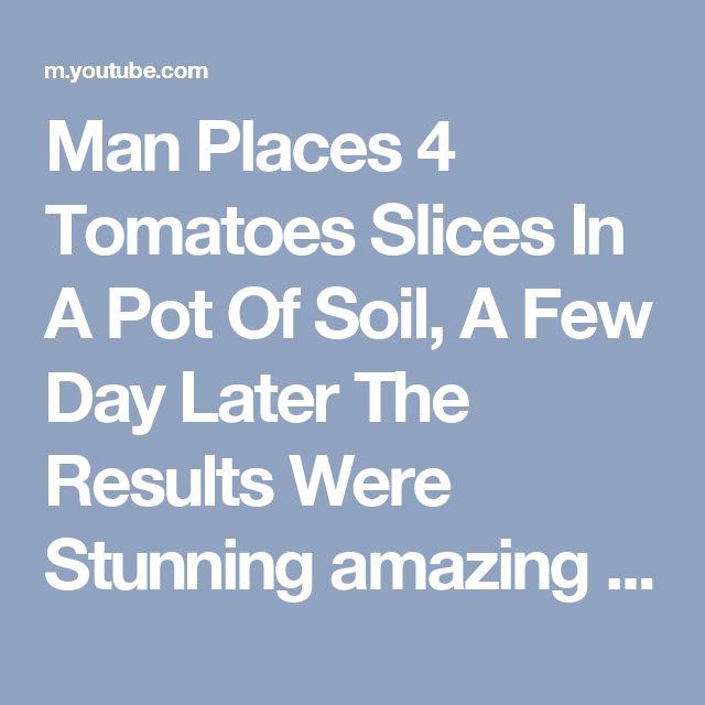 Man Places 4 Tomatoes Slices In A Pot Of Soil, A Few Day Later The Results Were Stunning amazing - YouTube