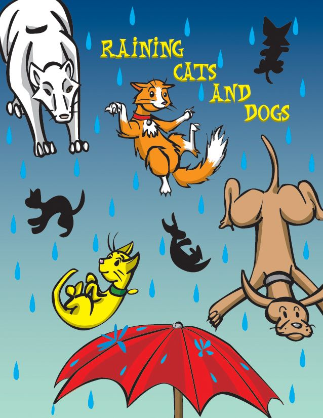 It S Still Raining Cats And Dogs Raining Cats And Dogs Dog