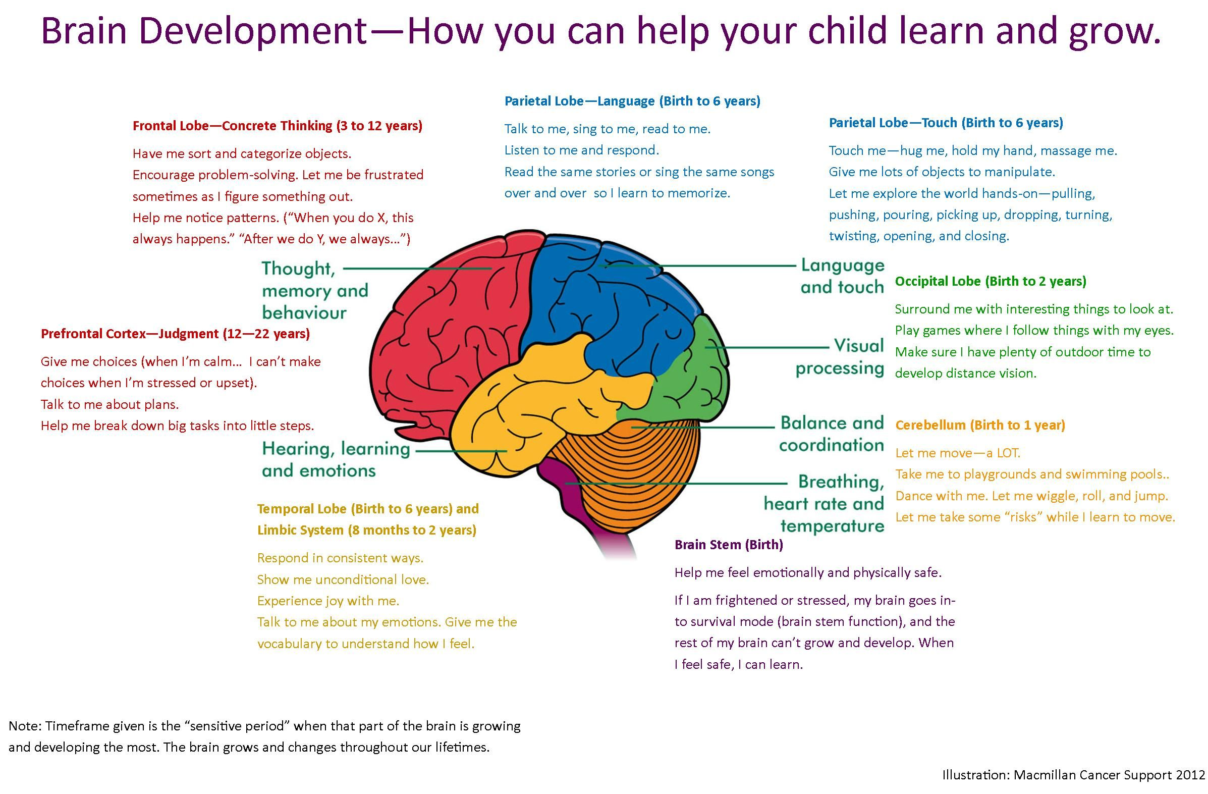 Brain Development How To Help Your Child Learn And Grow
