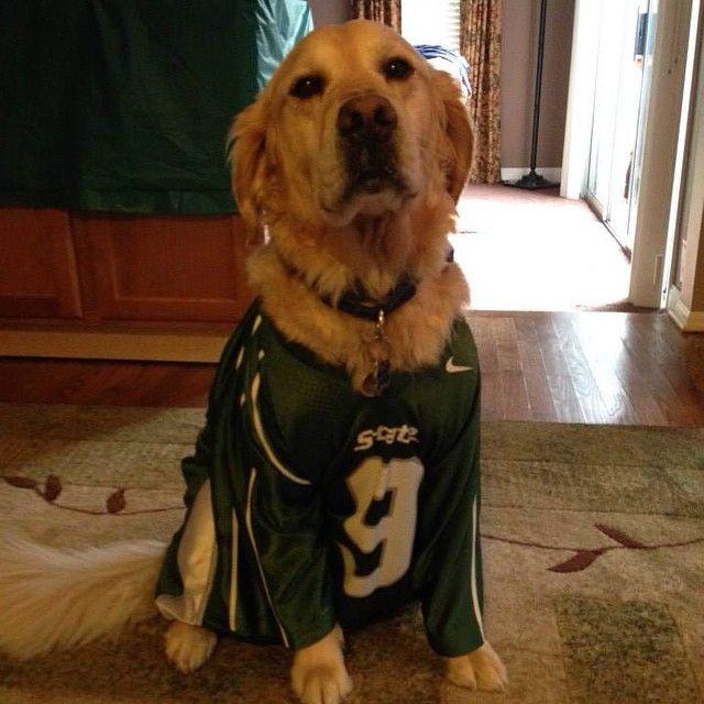 My Dog Knows Which Team To Root For Msu Michiganstate Uofmmsu