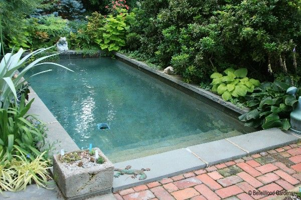 Pool In A Planted Nook Pool Landscaping Plunge Pool Cost Pool Cost