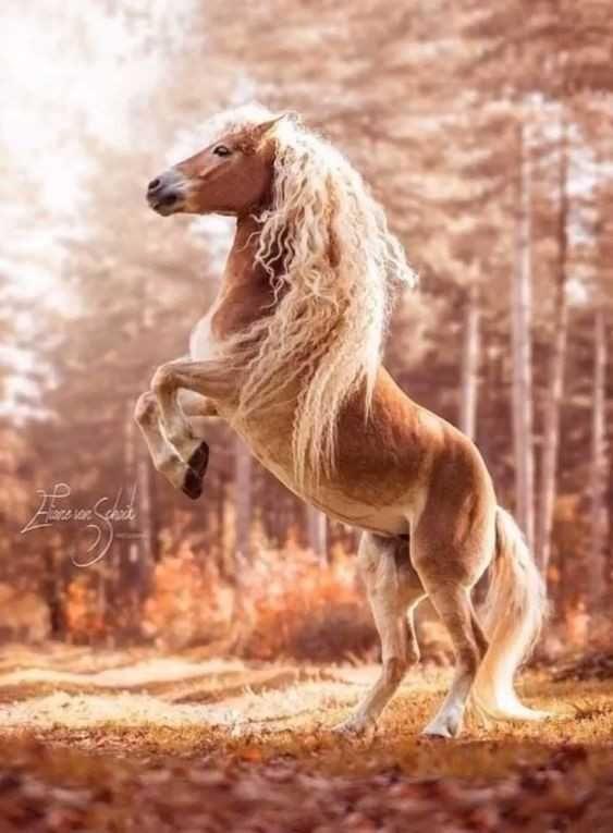 Beautiful horses - Imgur