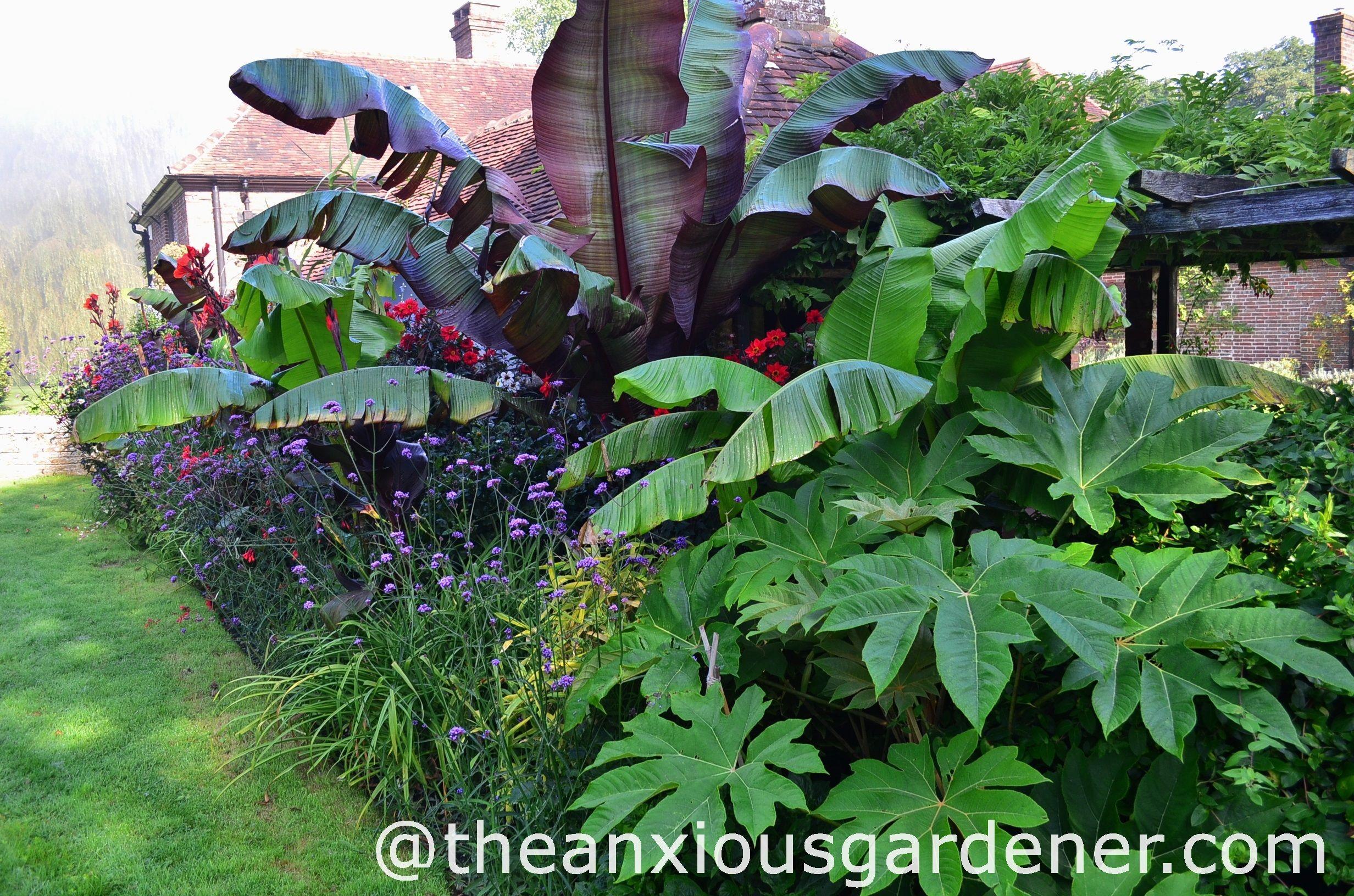 Hardy Tropical Gardens Google Search