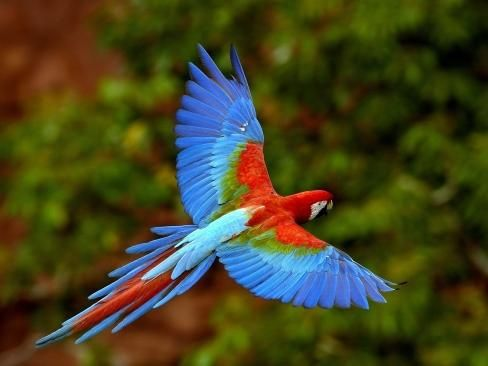 Bunter Papagei im Flug von oben