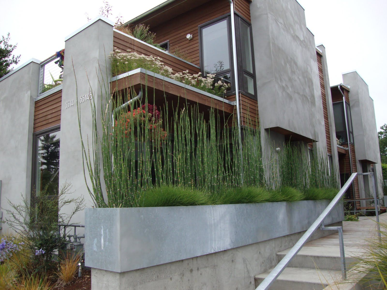 Concrete Window Box Planters Horsetail Planter Standard Horsetail And Dwarf Horsetail