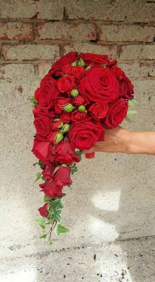 Orange Rosen Bedeutung. die rosenfarbe bedeutung