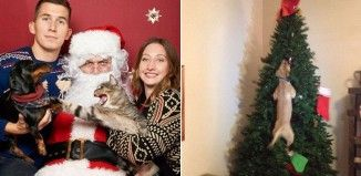 18 Mascotas que ODIAN la Navidad más que muchas personas http://ift.tt/2hnoJQr