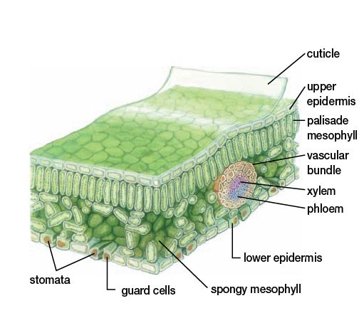 Pin On Science Illustration
