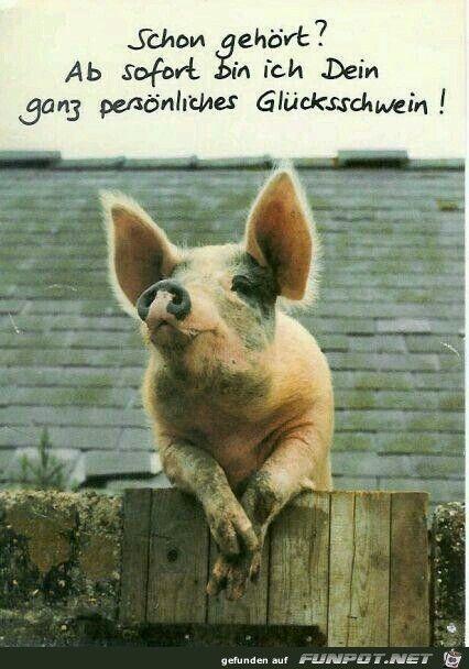 Glucksschwein Spruche Gluck Lustige Bilder Geburtstag Bilder