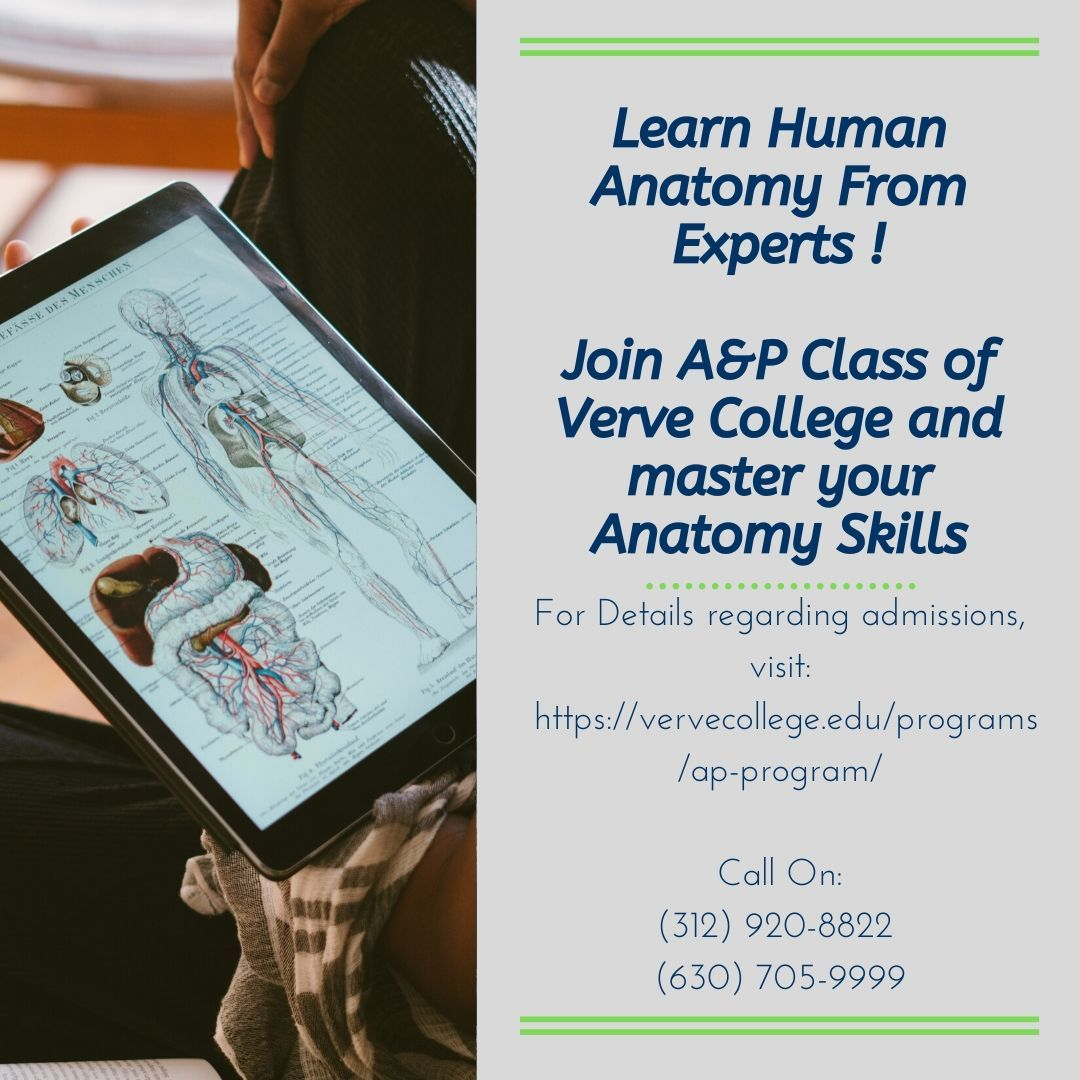 Master Human Anatomy With Verve College's A&P Class in