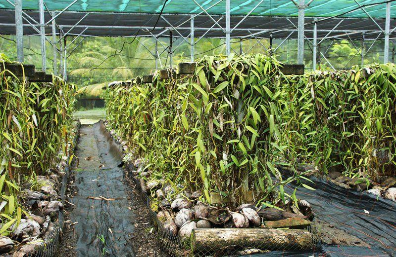 Vanilla Farm = Big $   French polynesia, Farm, Polynesia