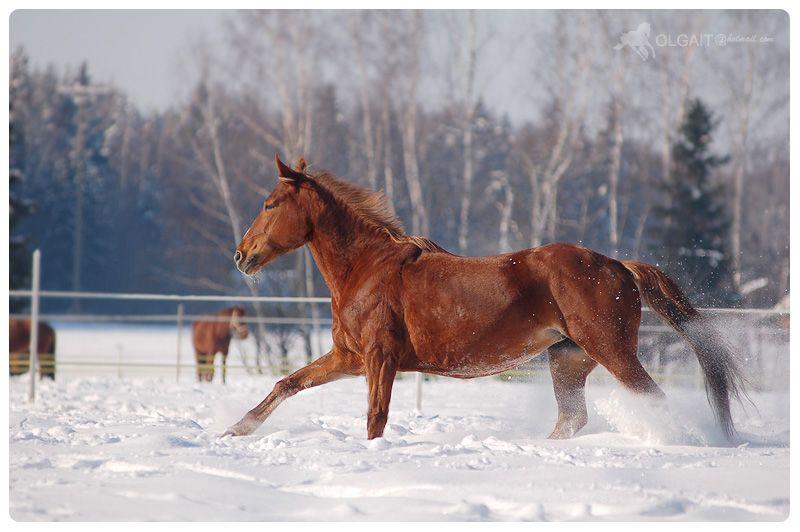winter day.. by Olga5.deviantart.com