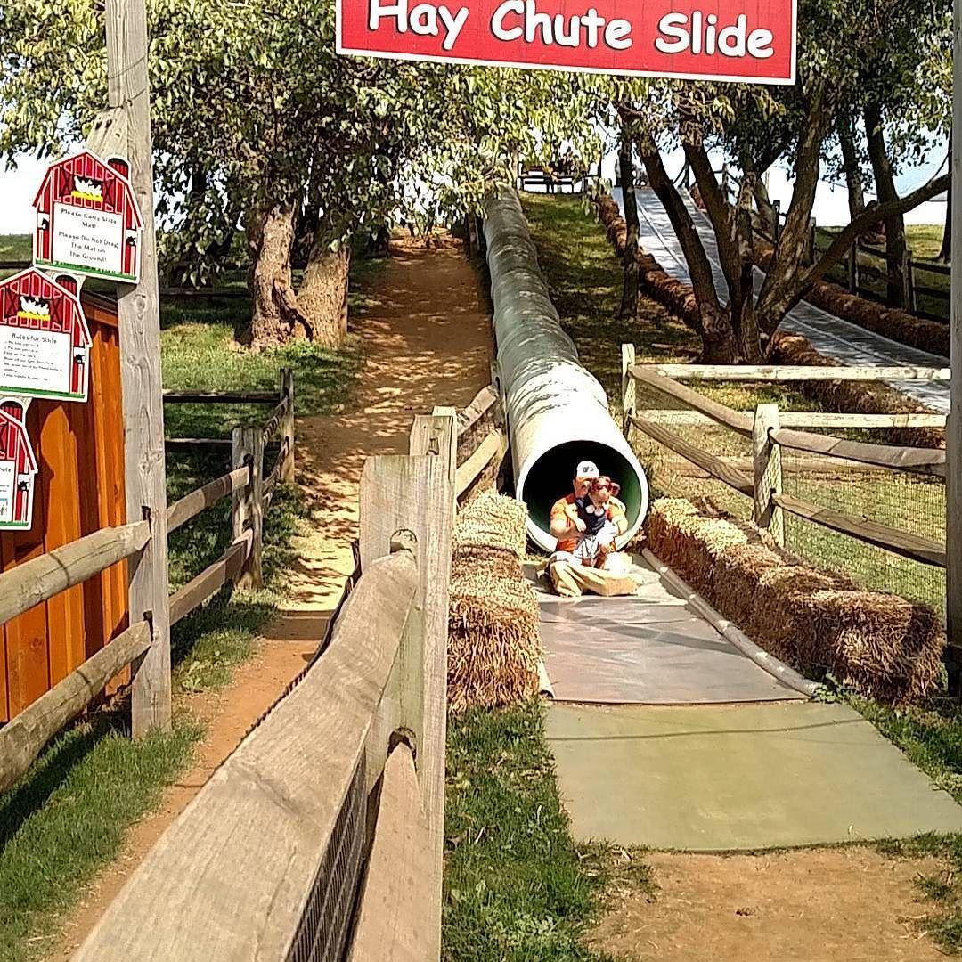 We loved the Hay Chute Slide. @cherrycrestadventurefarm #VisitLancaster #JerseyFamilyFun