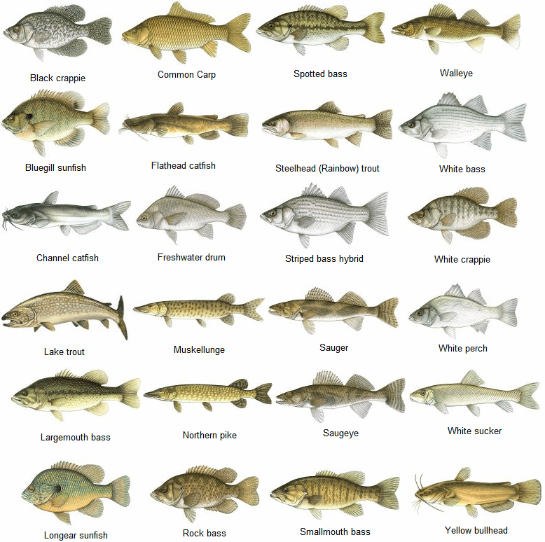 Know your fish fishing pinterest fish outdoors and camping